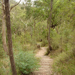 Six Foot Track winding along a long set of timber steps east of the Coxs River