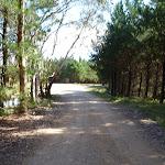 Walking beside the pine plantation near Black Range Camping Ground (416924)