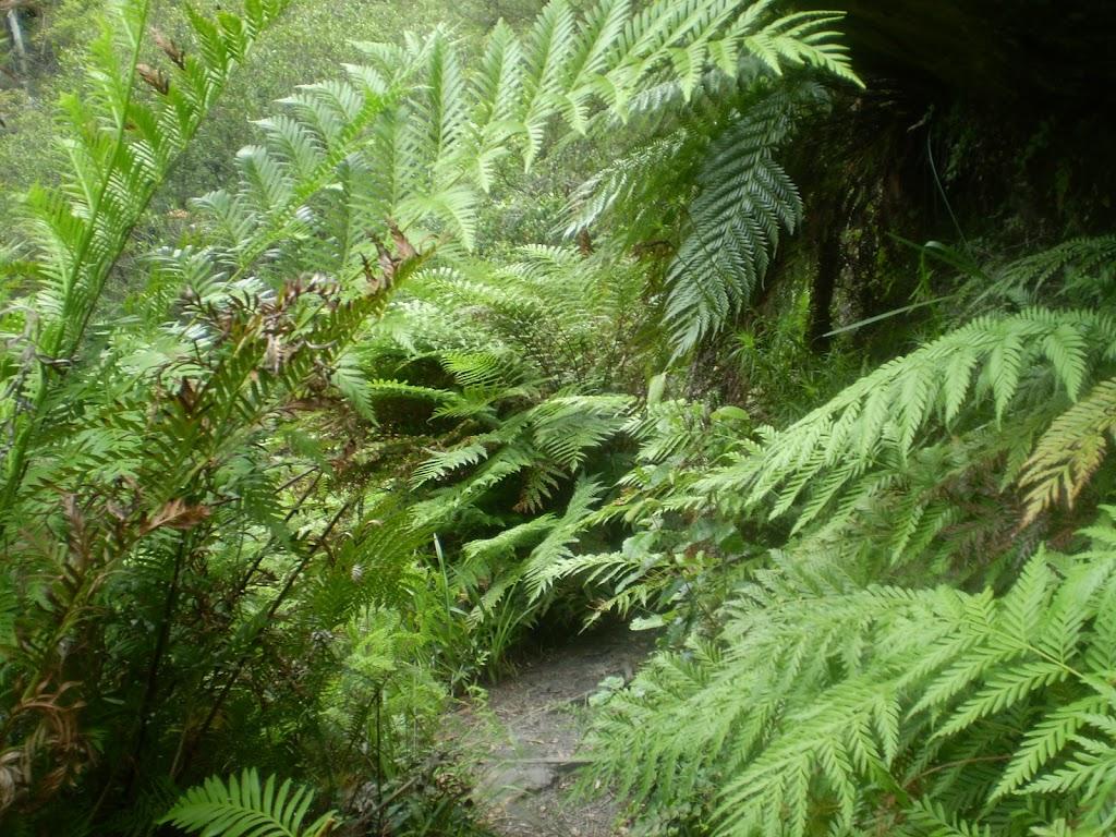 Ferns nearing Lillian's Glen