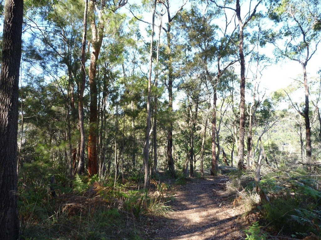Near the top of Berowra Track (419017)