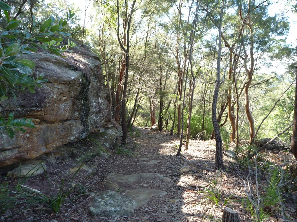 Wide section of the Berowra Track