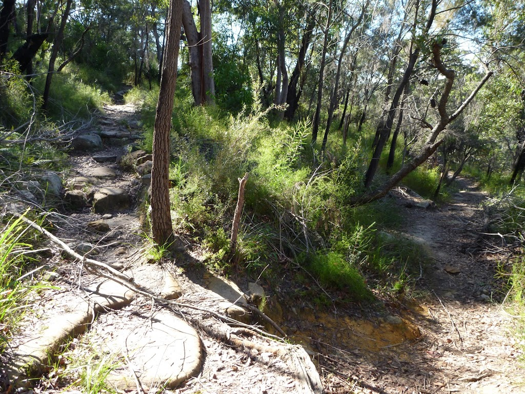 Winding along the side of the hill on the Berowra Track