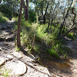 Winding along the side of the hill on the Berowra Track (419146)