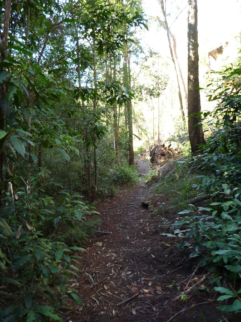 Walking along the Berowra Track east of the Waratah Gully crossing
