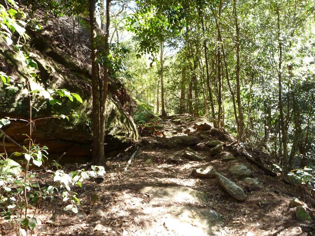 Walking through Waratah Gully