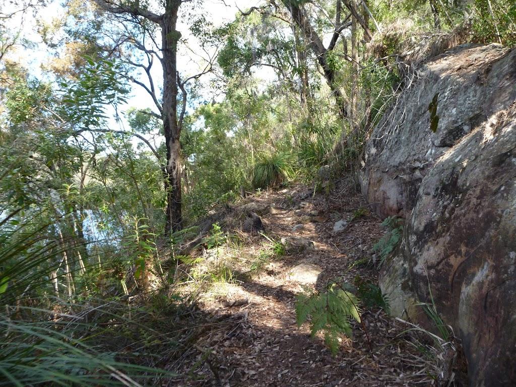 Ferny hill side beside Cowan Creek
