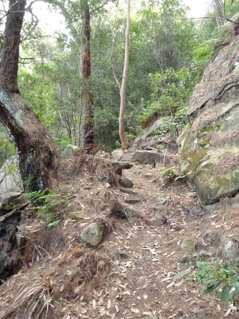 Rocky steps on Berowra Track