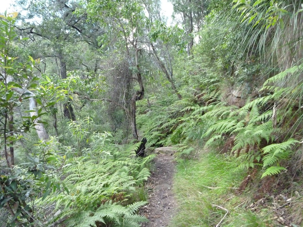 Ferny section of track south of Winson Bay