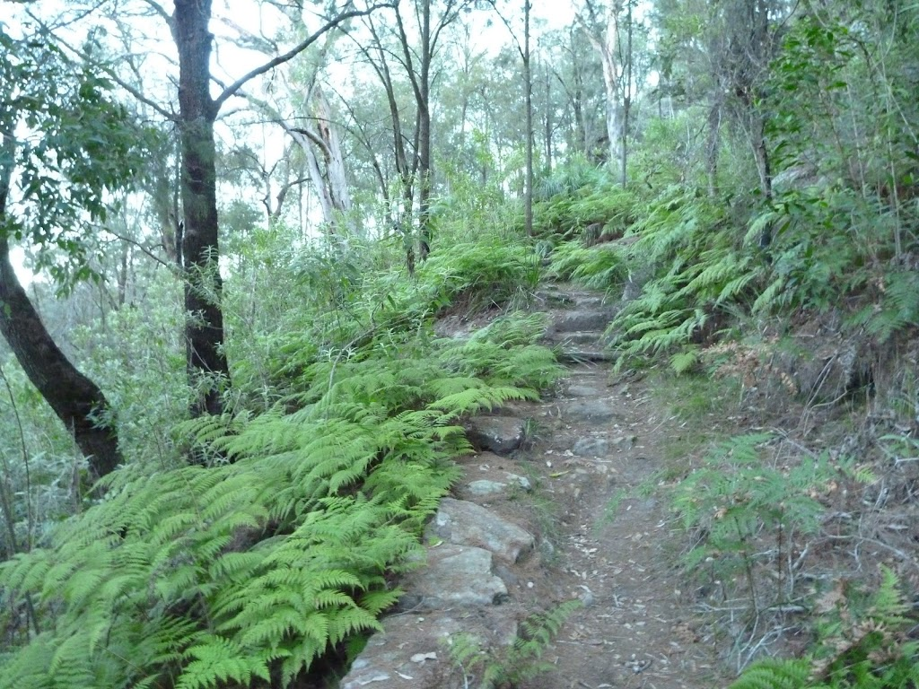 Near the bottom of Mt Kuring-gai Track (422008)