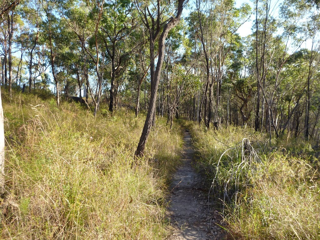 Flat section on the Mt Kuring-gai Track