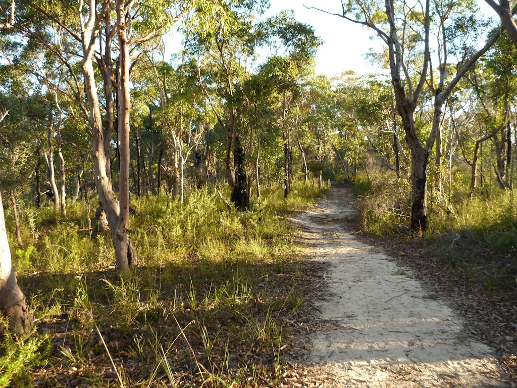 Wide flat track north of int of viewpoint and Mt Kuring-gai Tracks  (422353)