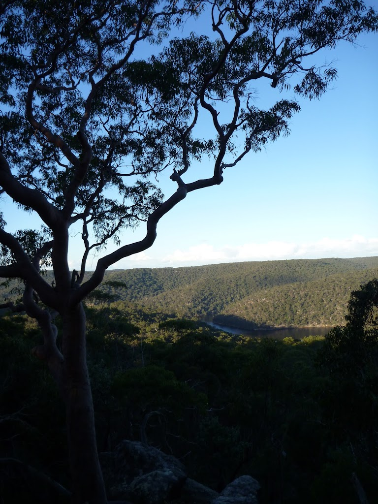 View from the Viewpoint off Mt Kuring-gai Track (422419)