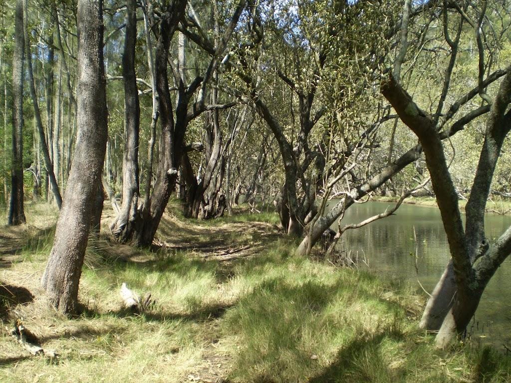 Mangroves (4394)