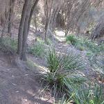 Garie Beach YHA Tk (44056)