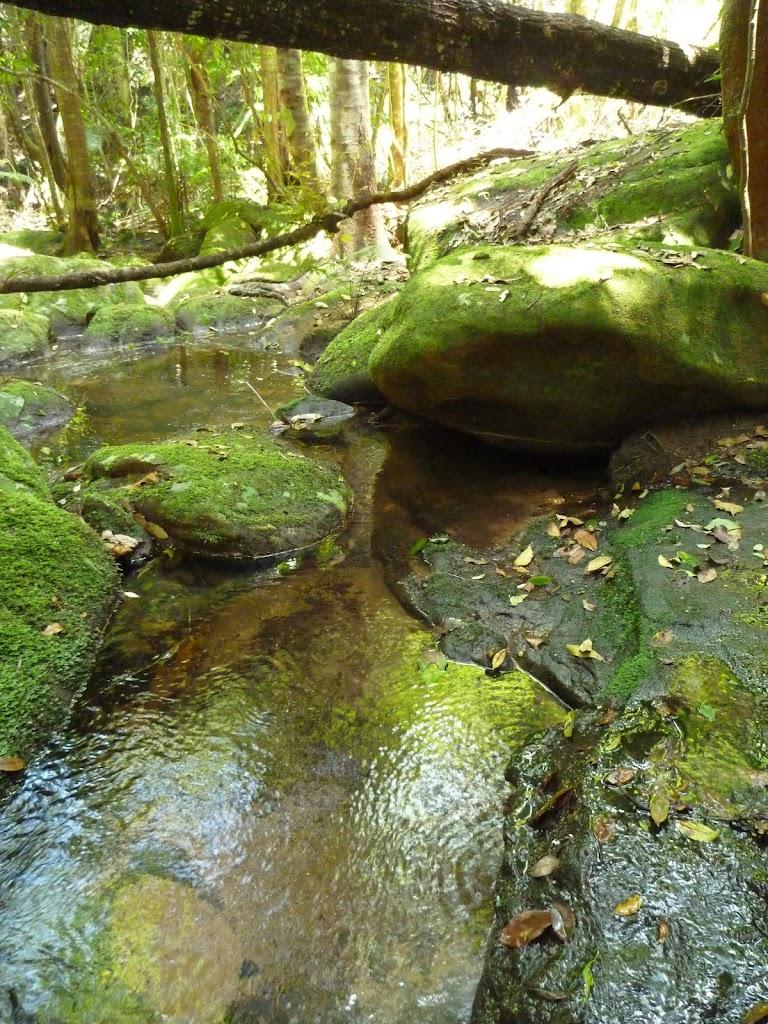 Dead Horse Creek (446846)
