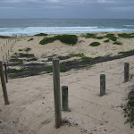 Fences to protect dunes