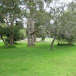 Open areas