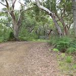 Road into Boomeri campsite
