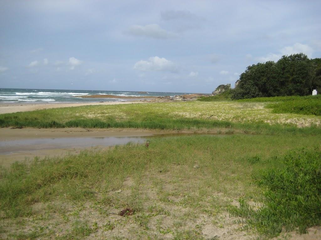 Grassy dunes near Diamond Head camping ground