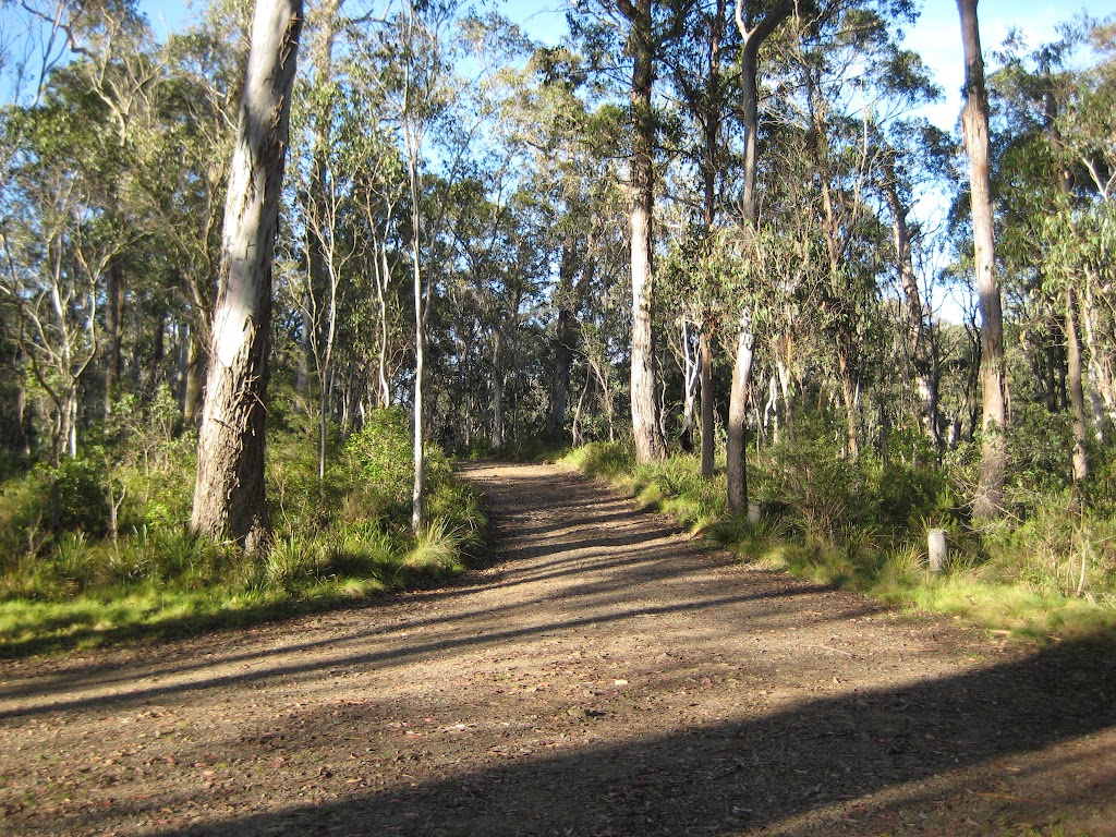 road around Manning River camping area