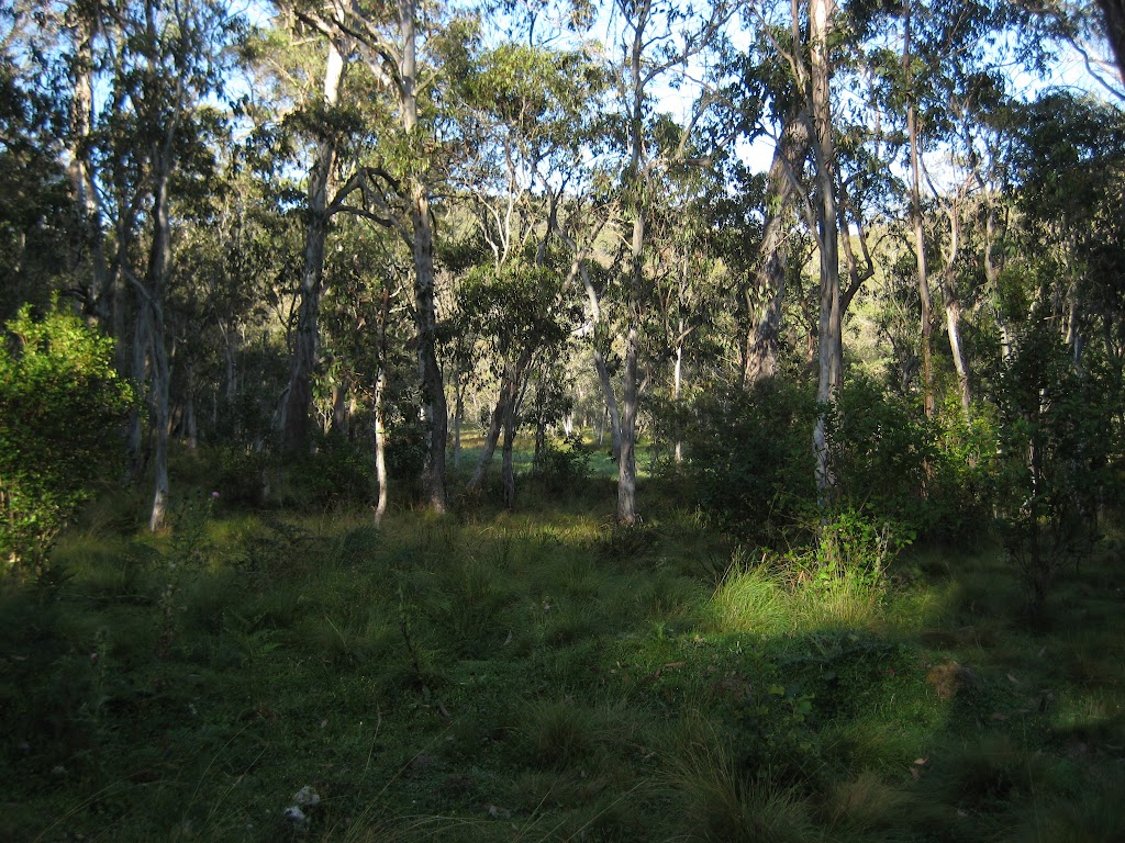 Looking over Manning River camping area