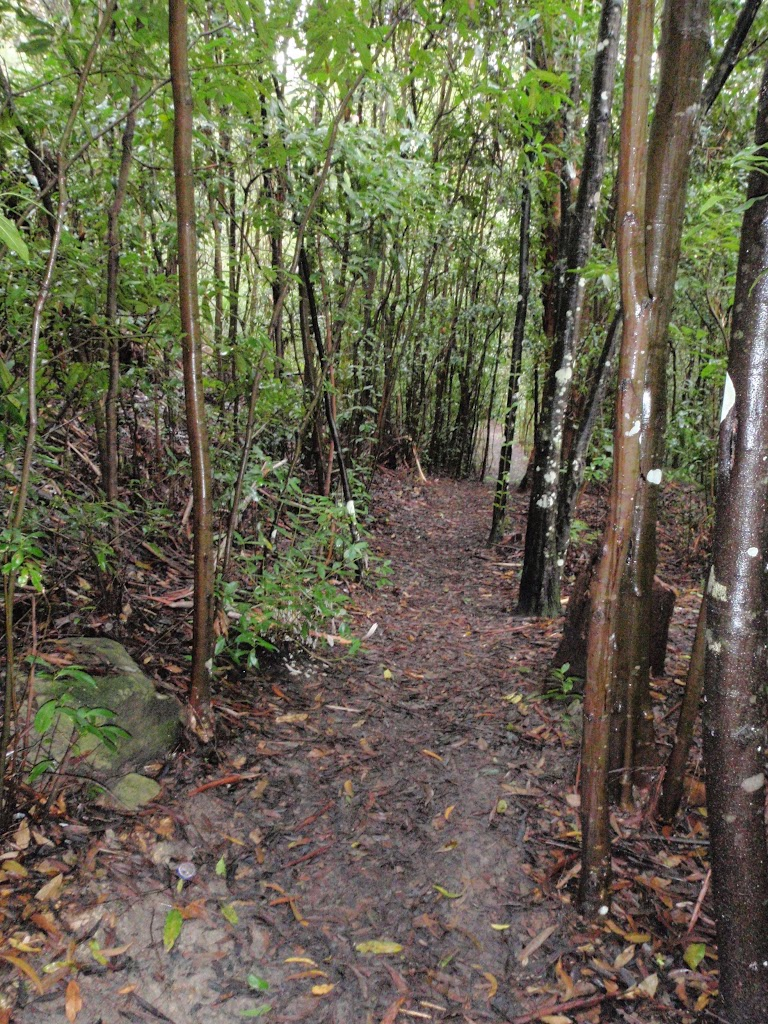 Closed (riparian) section of forest.