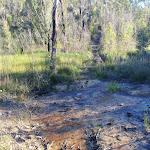 Service trail through swamp (49526)