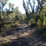 Asgard Swamp trail East (49823)