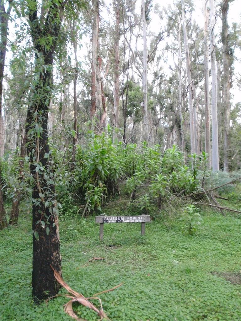 Blue Gum Forest sign