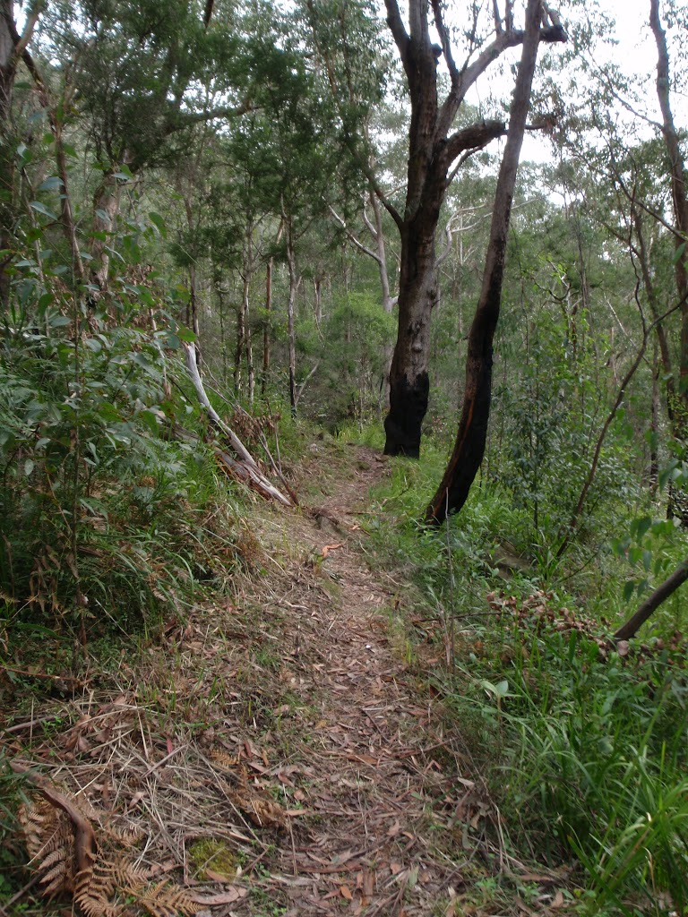 Track along the Grose River