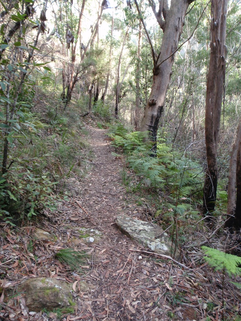 Pierces Pass track (50477)
