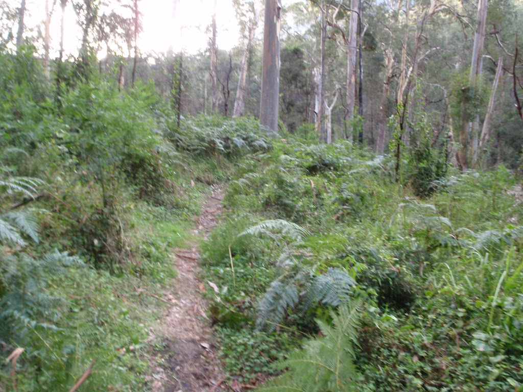Track north of Blue Gum Forest