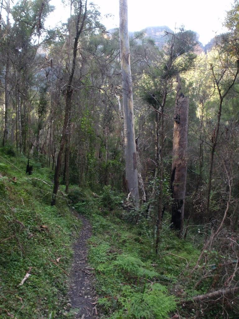 Grose River Track (50543)
