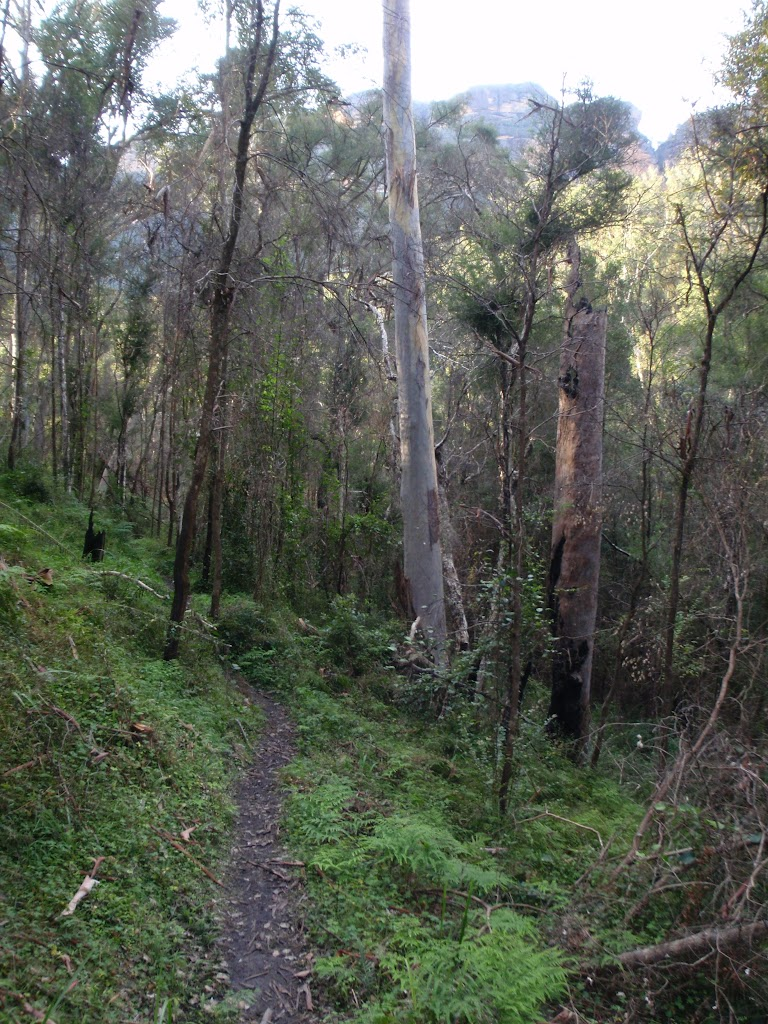 Grose River Track
