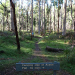 No Camping in Blue Gum Forest (50717)
