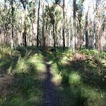Track to Acacia Flats (50846)