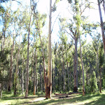 Acacia Flats Camping Area (50873)