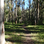 Track between Acacia Flats and Blue Gum forest