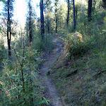 Grose River track (50906)