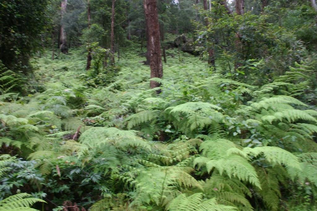 The Blue Gum Servicetrail goes through heavy ferns