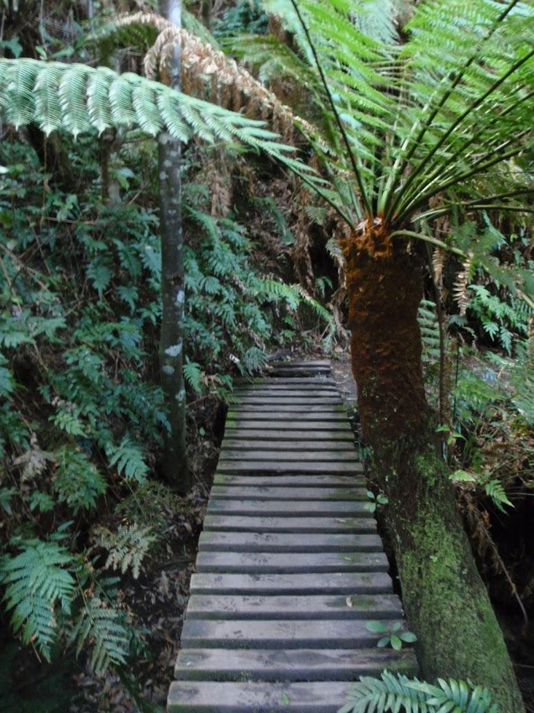 Small bridge and fern