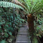 Small bridge and fern (51755)