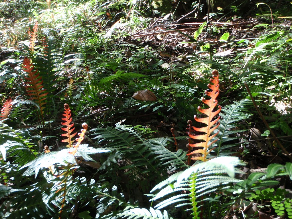Red ferns