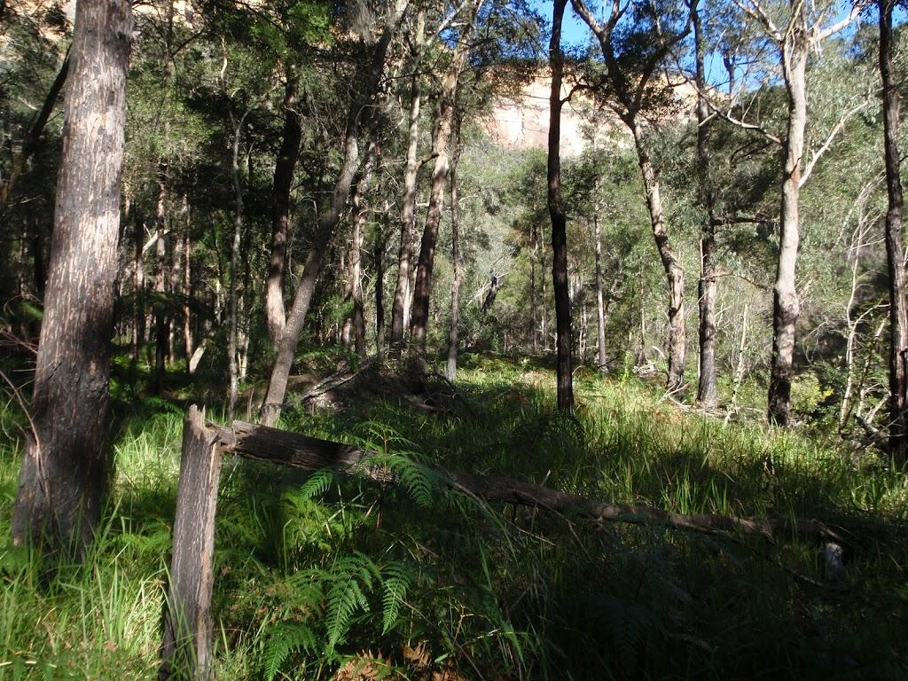 Vegetation high on Grose River bank