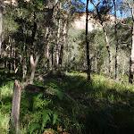 Vegetation high on Grose River bank (52127)