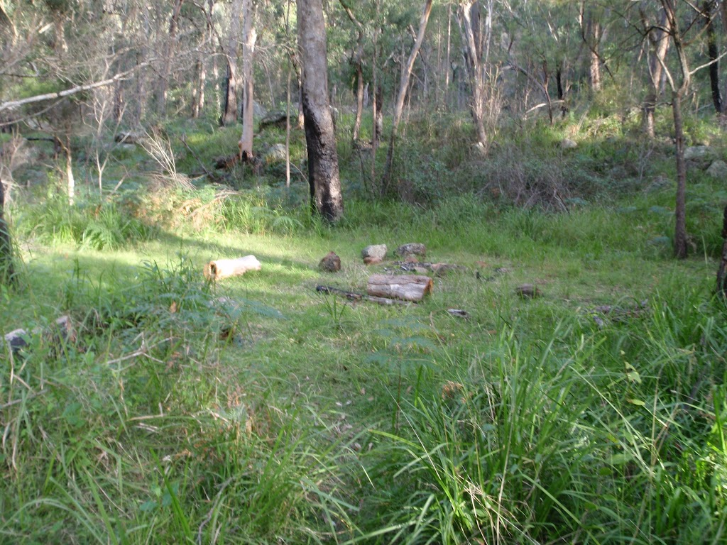 One of many clearings along the Grose River Track