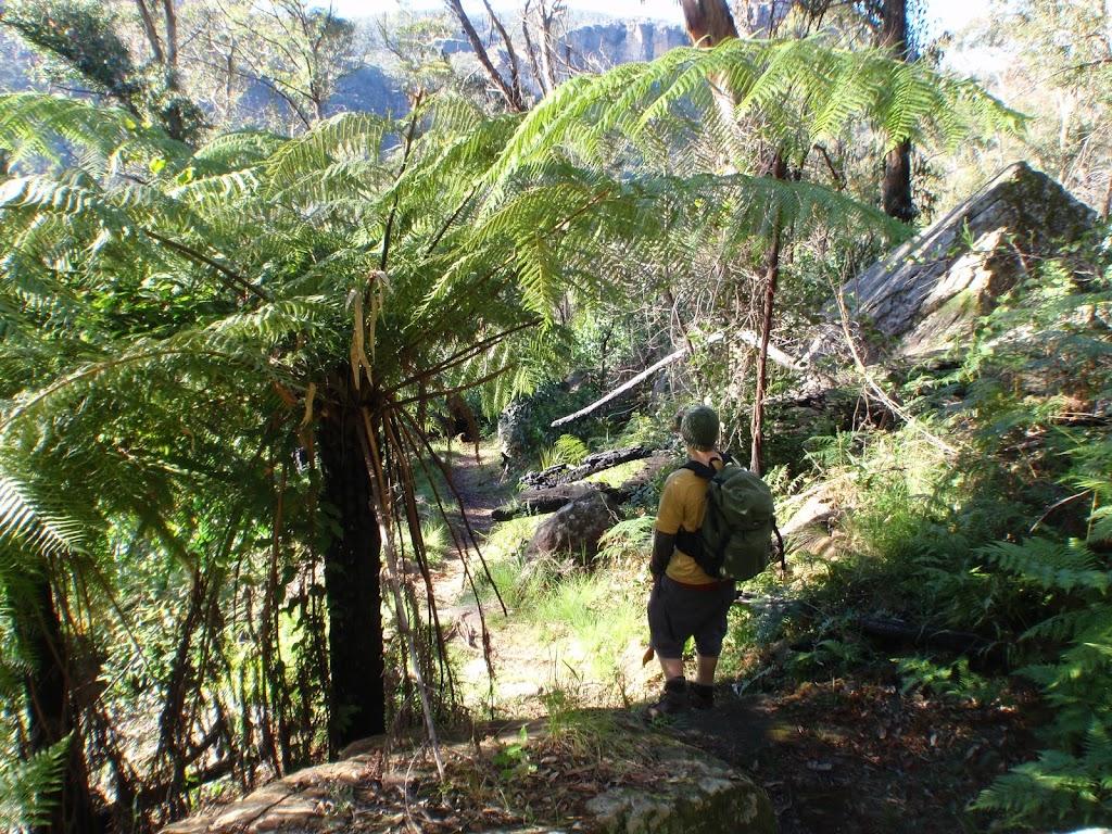 Walker under fern on Victoria Falls Track