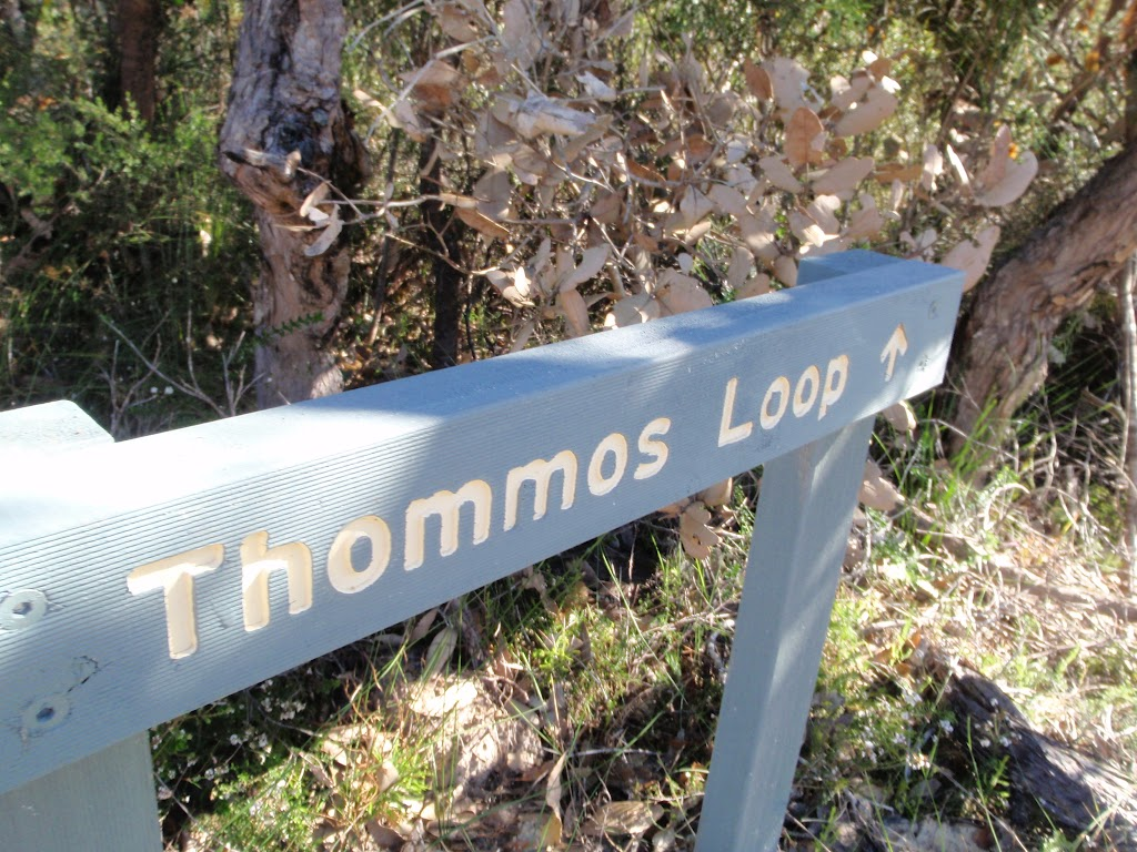 Thommos Loop track sign