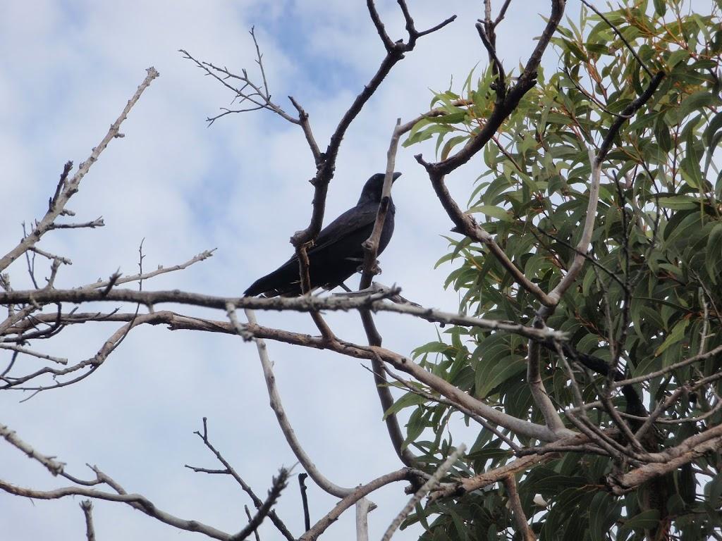 its a birdy (53627)