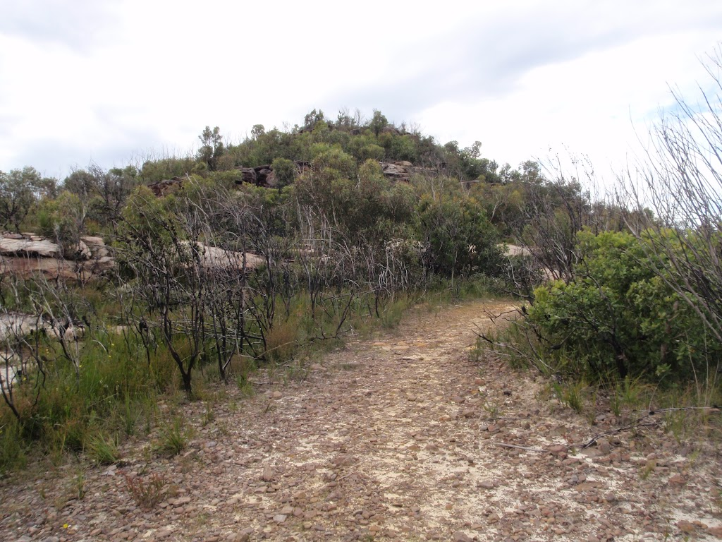 Track to Mt Wondabyne peak